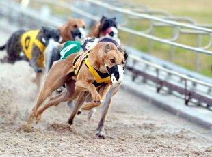 Greyhound Racing-Cambridge Raceway