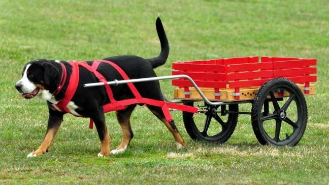 All Breeds & Crossbreeds Carting Day