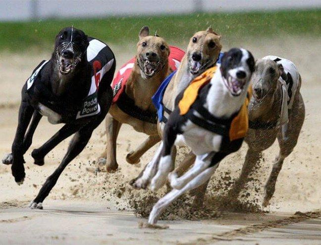 Cambridge Greyhound Racing