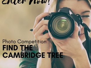 Find the Cambridge Tree Photo Competition.