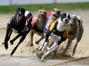 Greyhound racing 13th June
