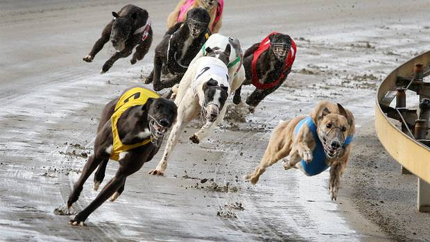 Greyhound Racing CANCELLED