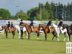 North Island Pony Club Show Jumping Champs