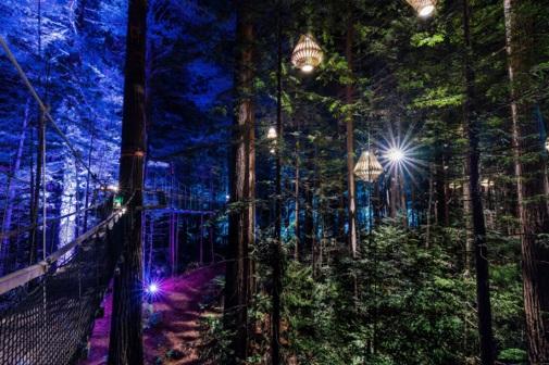 Rotorua – Eat Streat & Redwoods Nightlights Treewalk