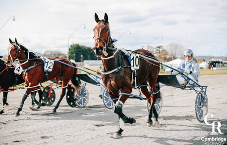 Harness Racing – Flying Mile