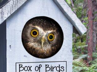 Box of Birds