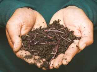 Culinary Cambridge ** Cancelled** – Worm Farming – Ancient solutions to modern problems