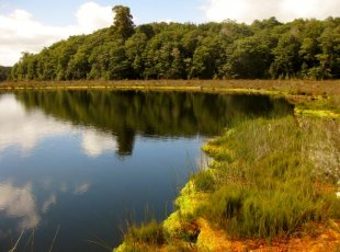 National Wetland Centre