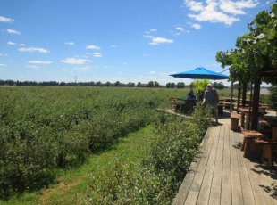 Monavale Blueberry Orchard Tour