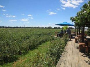 Monavale Blueberries