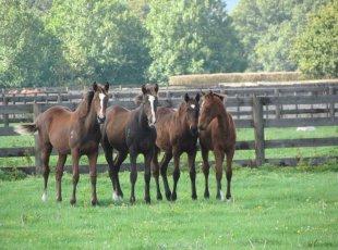 Waikato Thoroughbred Horse Stud Tour